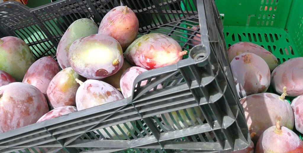 Mango na targowisku. Foto: Przewodnik Andaluzja.