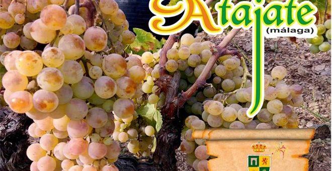 Festiwale gastronomiczne w Maladze – listopad 2019